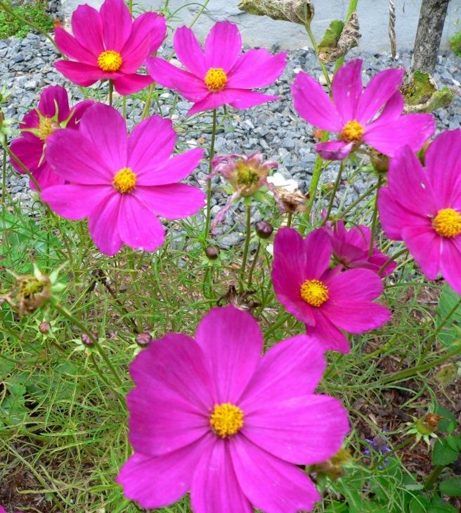 Shocking Purple Flowers, Photo by Roger Vincent Jasaitis, RVJart.com